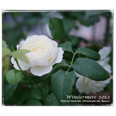 ウィンダーメアの写真