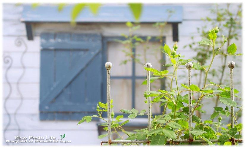 フォトスタジオ石井のお庭